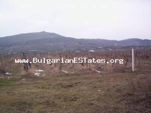 Plot of land for sale cultivated with vine yard located at the town of Aytos.